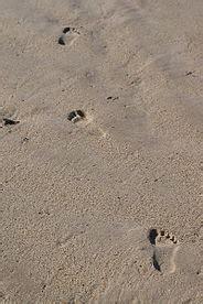 פסיעות בחול