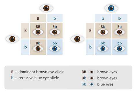 תורשת צבע עיניים כחולות