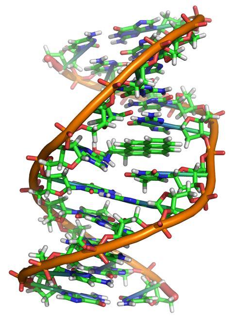 DNA דנא