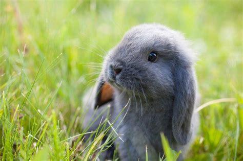 ארנב - בעל חיים